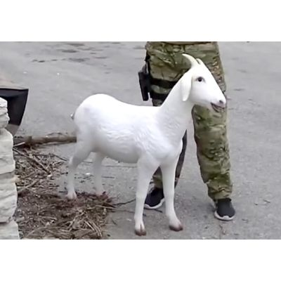 Goat Decoy - Improvised Explosive Goat (IEG)